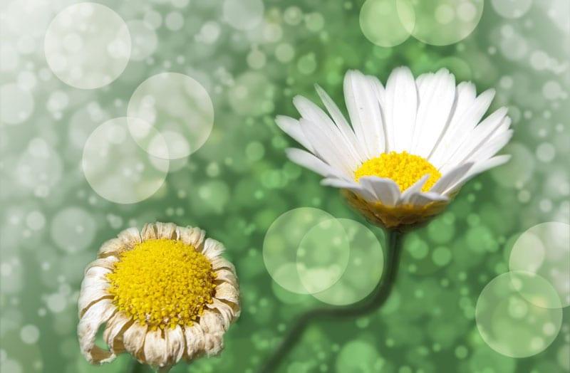 flower blog Thetahealing Ausbildung